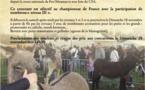 Concours de chien de bergers sur troupeau