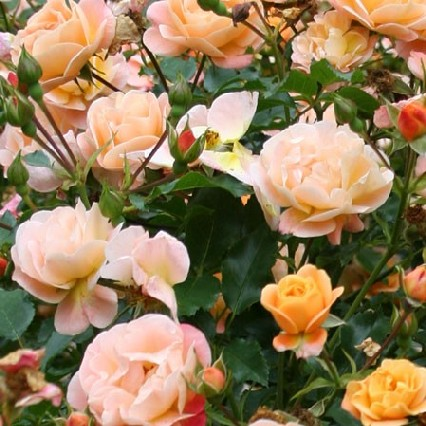 Marché aux fleurs.