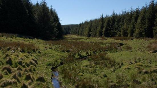 Le PCP défend une politique alternative pour le monde forestier et rural