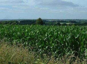 Moratoire sur les OGM : ce n'est pas trop tôt