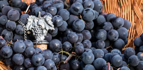 L'Œnologie : Une Science aussi noble que le Vin !
