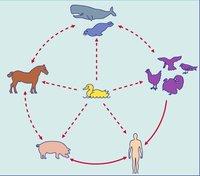 France: un cas de grippe porcine négatif