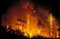 España Editoweb 5 Agosto 2009