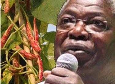 Source: forumtogo.org (Kofi Yamgnane: le Togo pour une poignée de haricots)