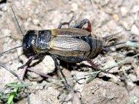Sauterelles et larves au menu pour 2050