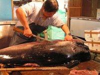 L'UE interdit la pêche au thon rouge