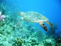 Editoweb point presse tortue marine  et autres news