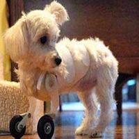 Géolocalisez votre chien