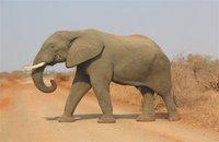 Actu Sciences: Un G8 des éléphants pour sauver les pachydermes
