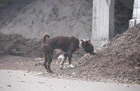 Faits divers: Un chien errant condamné à la lapidation et autres infos