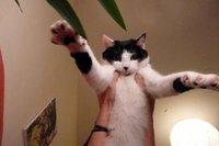 Insolites: chat noctambule et autres actus