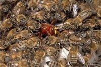 Insolites: attaque d'abeille et autres actus