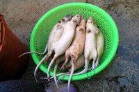 Santé: Un bon rat rôti, ça vous tente?