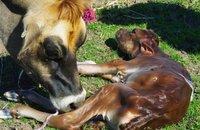 Insolite: elle mange son placenta