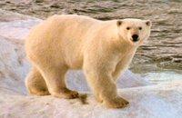 Insolite: sa tête dans la gueule d'un ours