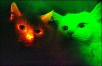 Des chats fluos contre le sida