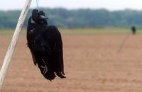 Le suicide et le corbeau