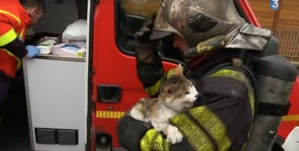 Les pompiers sauvent trois chats d'un immeuble en feu
