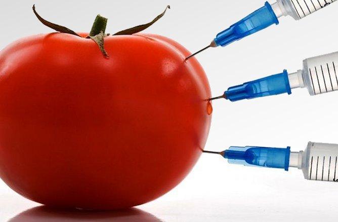 OGM: a-t-on raison de s'inquiéter?