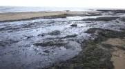 Mer Noire: bilan de la marée noire du 11 novembre.