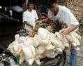 Grippe aviaire : 100è mort en Indonésie