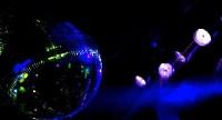 BDR : Sud Animation Sound Light en Provence