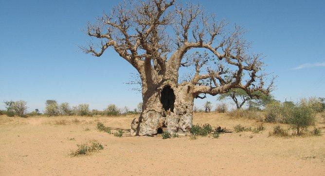 Peut-on vraiment reverdir l'Afrique ?