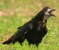 Tchad: Ousmane le Web-Corbeau d'Hissene Habré