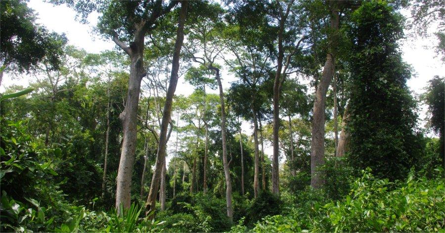 Aménagement et conservation des ressources végétale au Benin