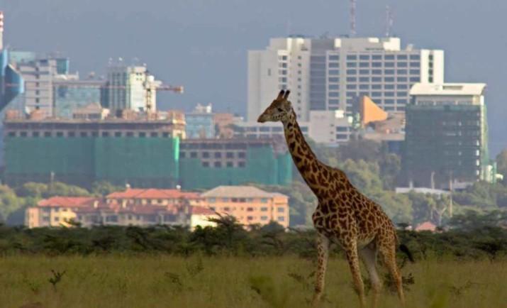 Coronavirus  Kenya : 4 738 cas après 100 jours