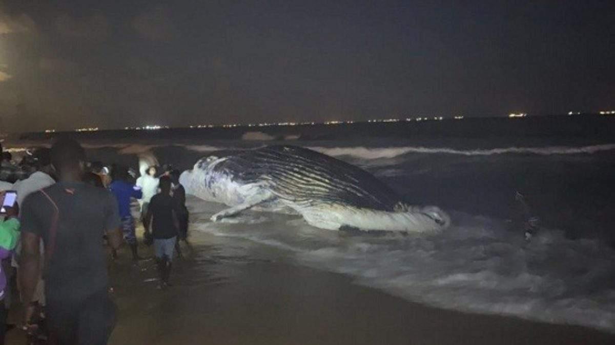 Une baleine échoue sur la plage de Lomé pour la deuxième fois en une semaine
