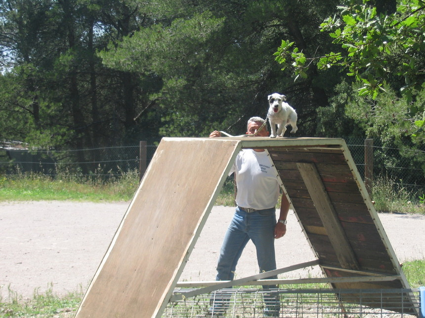 Pension canine en Provence BDR