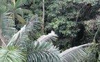Actus monde: l'Amazonie menacée de sécheresse