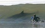 Alerte au requin : baignade interdite en Côte d'Azur