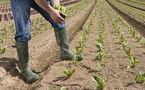 10 tonnes de fruits et légumes vendues directement aux consommateurs