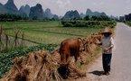 David Cameron en visite en Chine et infos monde
