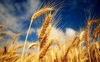 La FAO met en garde contre une crise alimentaire majeure et infos Monde