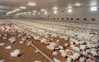 Actu Monde: Grippe aviaire aux Pays-Bas et autres news