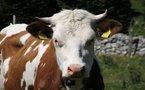 Economie: Les prix agricoles resteront élevés et autres actus