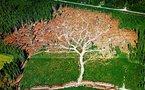 Sciences: Lego s'engage contre la déforestation