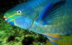 Du poisson frais pour vos neurones