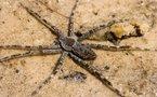 Insolite: araignée mutante