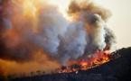 Algérie : Un homme accusé à tort d'avoir déclenché des feux de forêt tué par la foule