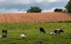 Crise agricole: quelles réponses?