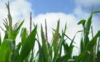 Un agriculteur obtient la condamnation de Monsanto pour la toxicité d'un herbicide