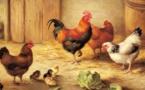 Plusieurs foyers de grippe aviaire en Aquitaine