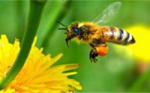 Du miel artisanal et naturel au marché Nature et Bio de Bordeaux