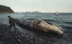 Marée noire: les dangers des dispersants