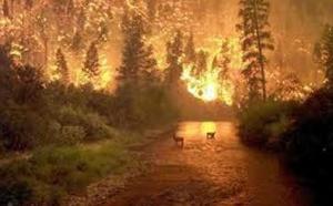 Israël: le Carmel brûle toujours et infos Moyen Orient