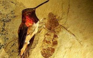 Des fourmis géantes ont migré entre l 'Europe et l 'Amérique